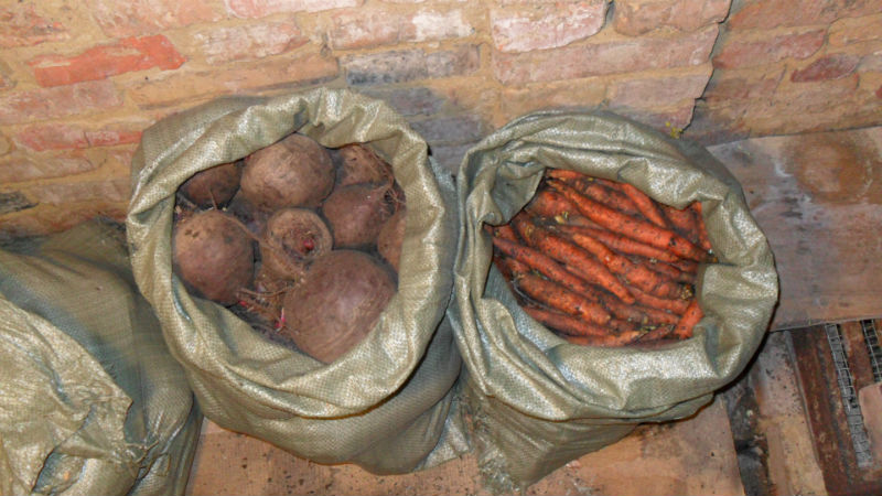 Мешки с морковью и свеклой в погребе