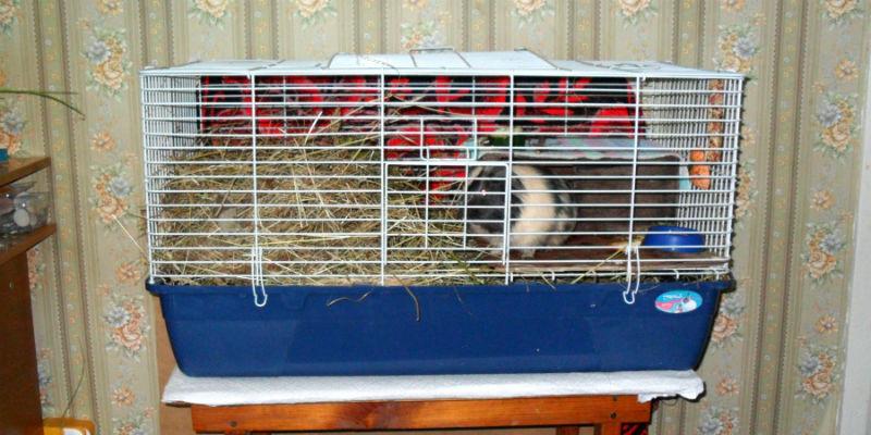 Клетка для морских свинок и декоративных кроликов
