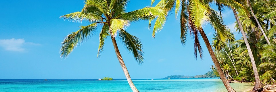 Пальмы на побережье океана